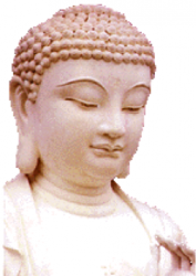 Bouddha rose